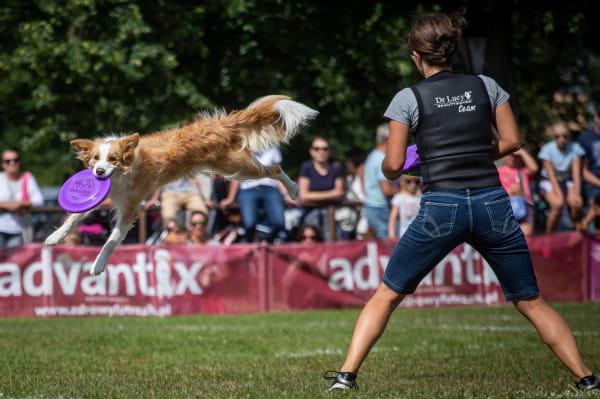Zawody Latające Psy odbędą się w ten weekend w parku Kolibki.