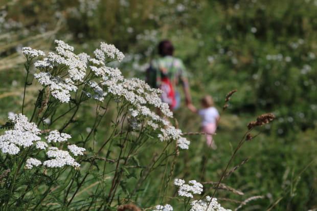 Wzorowy przykład łąki kwietnej mieści się wokół Opływu Motławy. Gorzej prezentuje się to w innych częściach miasta.