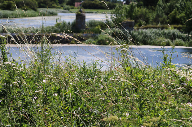 Nie wszędzie niekoszona zieleń prezentuje się tak dobrze, jak wokół Opływu Motławy.
