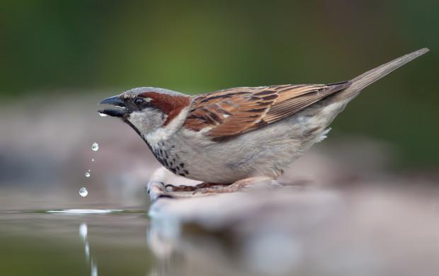 W łatwy sposób możemy pomóc ptakom przetrwać upalne dni.