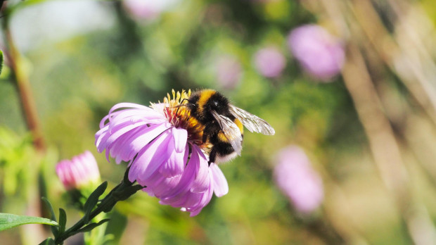 Wiele spośród tych roślin zapewnia pokarm pszczołom, dostarczając im nektar i pyłek. Bez nich, liczebność i różnorodność pszczół będzie się zmniejszać, prowadząc czasem do zaniknięcia ich obecności na danym terenie. To właśnie te rośliny zapewnią ciągłość w dostarczaniu pokarmu tak lubianym przez nas pszczołom, motylom czy trzmielom.