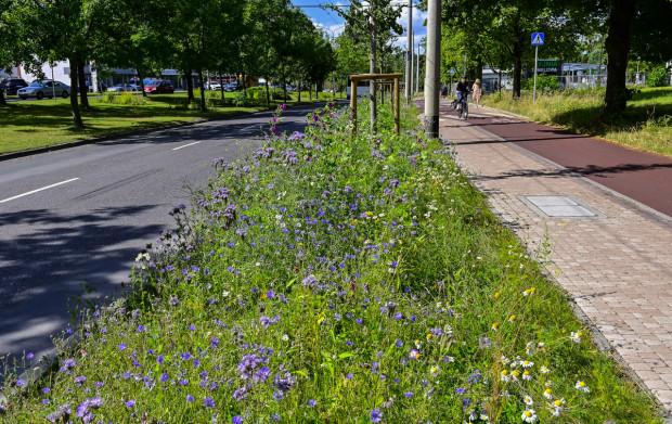 Łąka kwietna w Sopocie. Miasto zaprasza mieszkańców do wskazania, gdzie mają powstać kolejne takie miejsca.