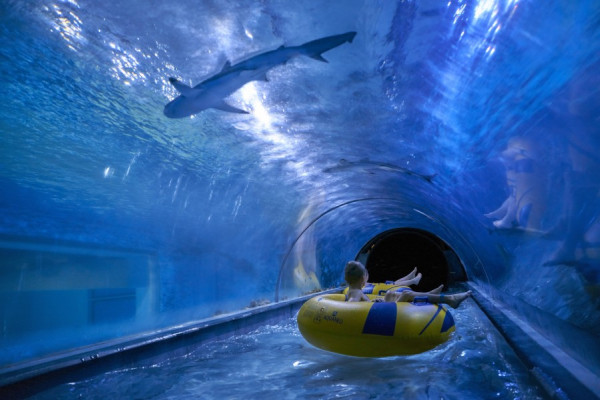 Takiej zjeżdżalni nie ma nigdzie indziej. Podczas 60-metrowego zjazdu przepływamy podświetlonym tunelem przez rajskie akwarium, w którym pływają prawdziwe rekiny.