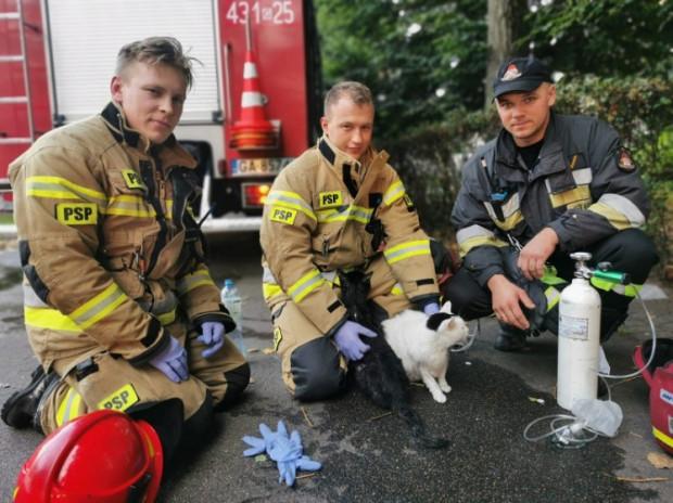 Po udanej akcji koty z zajętego pożarem mieszkania zostały przekazane właścicielom.