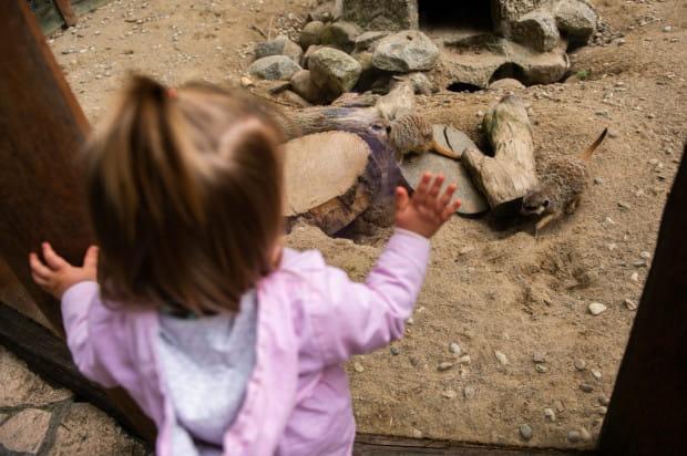 W weekend warto wykorzystać ładną pogodę i wybrać się na spacer np. do gdańskiego zoo.