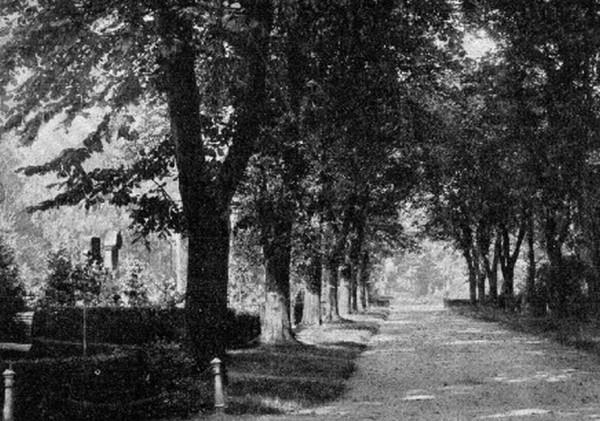 Przedwojenne zdjęcie jednego z cmentarzy, które rozciągały się wzdłuż a. Zwycięstwa. Jedynymi pozostałościami po nekropoliach są szpalery drzew, które wyznaczały alejki. Nagrobki zostały zniszczone i wykorzystane jako materiał budowlany, np. do utwardzania dróg.