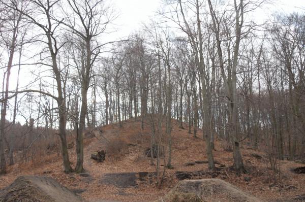 Góra Dantyszka w Oliwie, której wysokość wynosi 98 m n.p.m.
