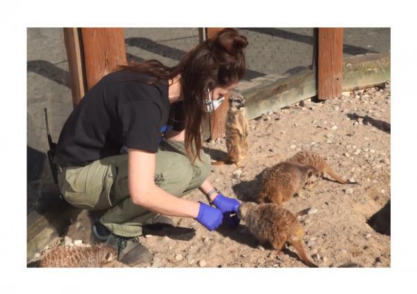 Teresa Michalewicz - szefowa zespołu pielęgniarzy opiekujących się drapieżnikami, nadzoruje pracę wszystkich opiekunów tej sekcji, najczęściej zajmuje się surykatkami i gepardami.