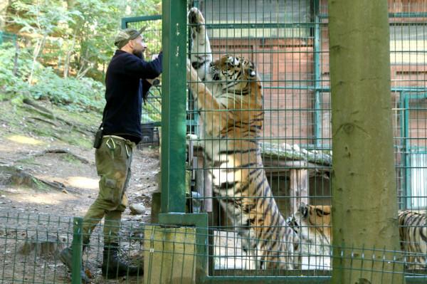 Damian Kukowski - pielęgniarz zwierząt, opiekuje się głównie tygrysami, wilkami europejskimi, mangustami i aguti.