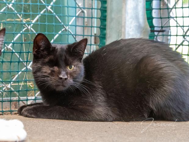 Czarnusia potrzebuje opiekuna, który na początek zapewni jej spokój i dystans, aby mogła poczuć się bezpiecznie. Ważna jest cierpliwość i łagodne podejście do kotki.