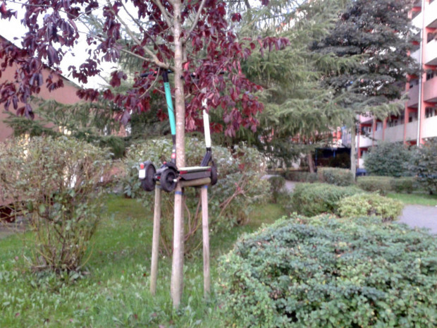 Hulajnogi zwisające z drzewa.