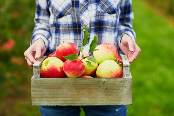 Sezon na jabłka trwa. Zwłaszcza w tym czasie warto przyjrzeć się ich prozdrowotnym właściwościom.