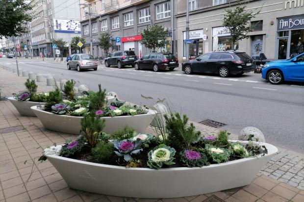 W krajobrazie Gdyni też pojawiła się jesienna roślinność.