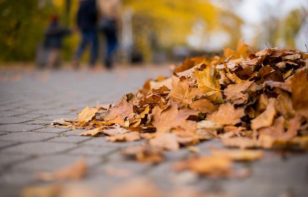 Mandat za niesprzątnięte liście sprzed posesji może wynieść 100 zł.