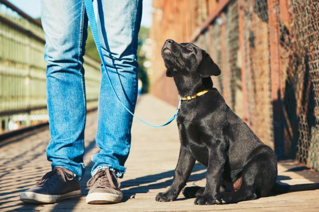 Będąc na kwarantannie lub w przymusowej izolacji, nie możemy opuścić mieszkania choćby na chwilę. Na szczęście jest mnóstwo osób, które z chęcią pomogą nam w wyprowadzeniu psa w tym czasie.