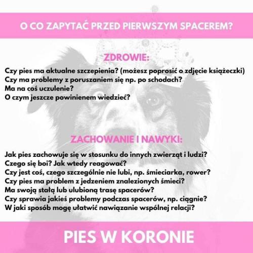 """W grupie facebookowej """"Pies w Koronie"""" znajduje się obecnie ponad 77 tys. użytkowników."""