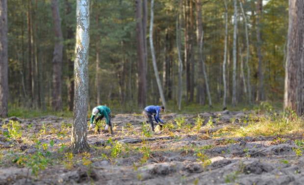 Ponad 2000 drzew udało się zasadzić w lesie na Górkach Zachodnich, dzięki sprzedaży kalendarza ze zdjęciami śmieci, które wcześniej zebrano w trójmiejskich lasach.