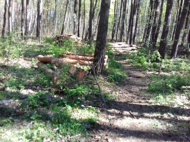 Do zdarzenia doszło w lesie nieopodal Kaczych Buków, a dokładnie na ścieżce między szlabanem grodzącym wjazd do lasu a kładką nad torami kolejowymi. Zdjęcie poglądowe.