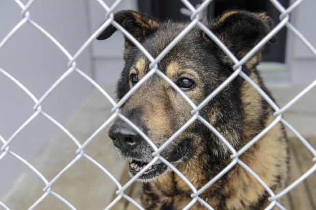 """Udało się znaleźć dom dla wszystkich psów, które wyrwano z """"piekła"""" w Radysach."""