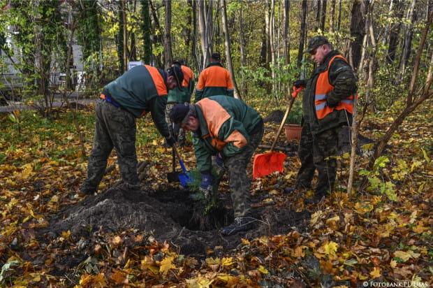 Egzotyczne sekwoje posadzono w parku Północnym. Gdy drzewa urosną, będą widziane aż z Helu.
