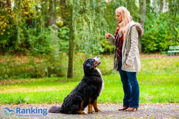 Odpowiednie przeszkolenie psa jest korzystne zarówno dla właściciela, jak i dla zwierzaka.