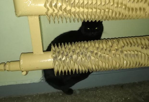 Od początku stycznia czarny kot błąka się po klatce schodowej na Morenie.