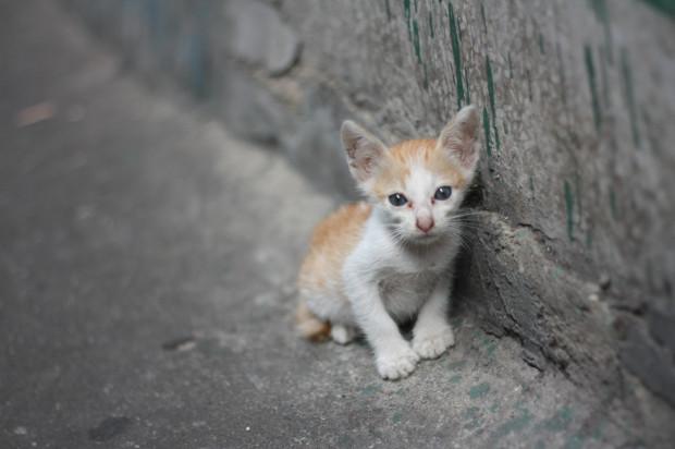 Pomoc bezdomnym kotom przynosi panu Zygmuntowi ogromną satysfakcję.