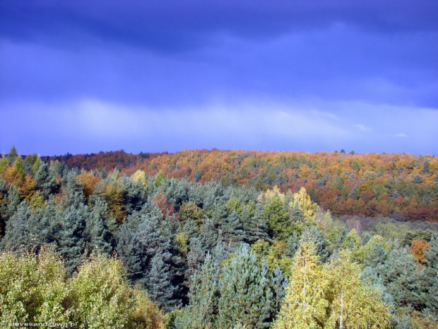 Powierzchnia Trójmiejskiego Parku Krajobrazowego wynosi blisko 20 tys. ha.
