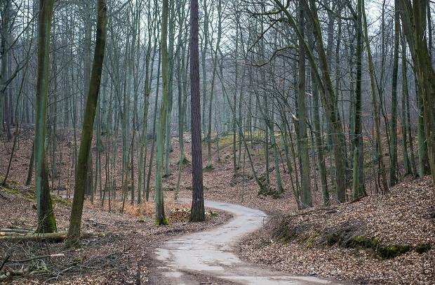 Wycinany jest drzewostan odgrywający znacznie większą rolę dla ogółu społeczeństwa, gdy rośnie, niż gdy jest ścinany i sprzedawany - piszą autorzy listu.