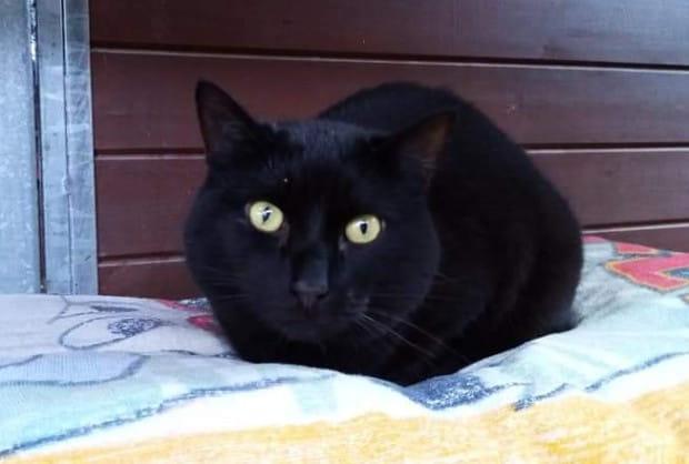 Maja jest śliczną zdrową kotką, która po śmierci opiekuna próbuje odnaleźć się w schroniskowej rzeczywistości.