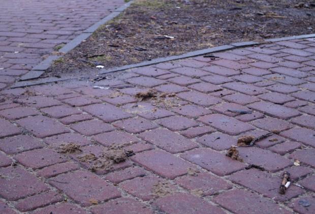 Tak po odwilży wygląda wiele chodników i trawników w Trójmieście.