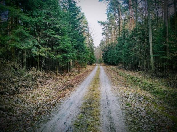 Lasy staną się bardziej dostępne dla nas, zachowujmy się jednak tak, żeby nie zakłócić spokoju ich stałym mieszkańcom.