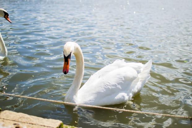 Grypa ptaków (AI - Avian influenza), pomór drobiu (FP - Fowl plaque), należy do chorób zwierząt listy OIE jako niezwykle zakaźna i zaraźliwa choroba wirusowa drobiu, która może powodować śmiertelność do 100 proc.