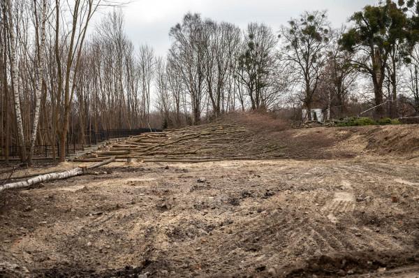 Wycinka drzew na terenie przy ul. Pomorskiej 68.