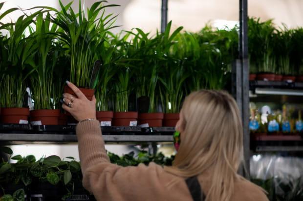 Osoby odwiedzające Targi Roślin miały tak różne oczekiwania, że nie sposób wskazać jeden dominujący trend. Wszyscy natomiast mieli jeden cel - zrobić duże i satysfakcjonujące zakupy.