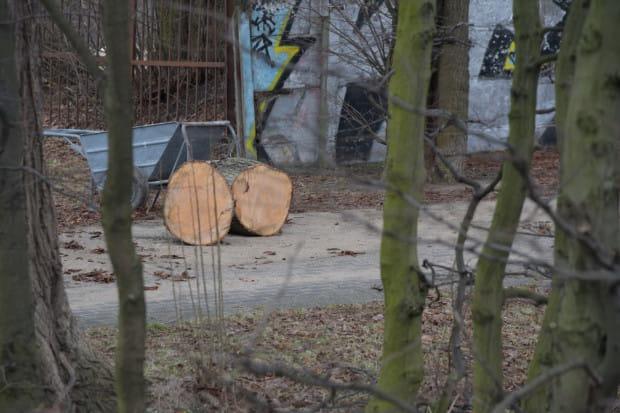 - Wszczęcie procedury wpisu do rejestru zabytków Parku Steffensów z mocy prawa całkowicie wstrzymuje wszelkie prace, także budowlane, ziemne i związane z przekształceniami zieleni na obszarze objętym wpisem - zapewnia rzecznik konserwatora.