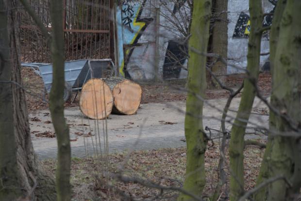 Zniszczeniu uległ historyczny szpaler starodrzewu na granicy pomiędzy parkiem Steffensów a dawnymi cmentarzami.