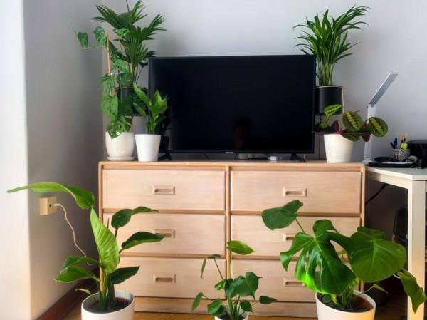 Zielony kącik w każdym domu, doda trochę przytulniejszego klimatu.