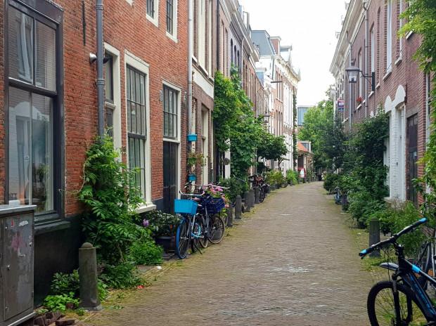 Ogrody fasadowe są popularne w całej Holandii. Na zdjęciu jedna z uliczek w centrum Haarlemu.