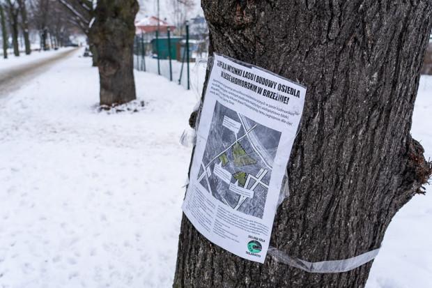 W lutym Zielona Fala Trójmiasto okleiła drzewa w Brzeźnie informacjami o planie i nekrologami.
