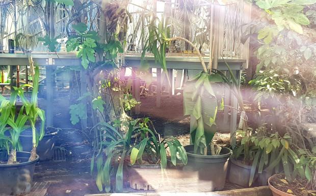 Zdjęcie naszego Czytelnika z wnętrza palmiarni wywołało sporą dyskusję na naszym portalu i w mediach społecznościowych. Urzędnicy zapewniają, że widoczne rośliny mają się dobrze.