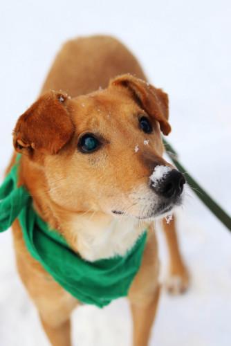 Jest niewidomym psem, jednak szybko poznał nową przestrzeń i porusza się po niej bez problemu. W domu pozostawiony sam, nie niszczy, nie szczeka, po prostu leży na ulubionym dywaniku albo szuka porozrzucanych dla niego smaków.