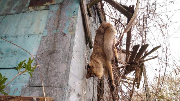 Policja ma sprawdzić, co doprowadziło do śmierci zwierzęcia.