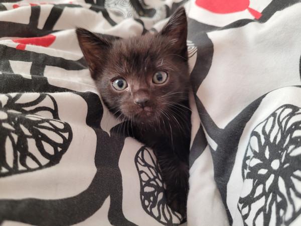 Fundacja Koty spod Bloku zajmuje się pomocą kotom. Pod opieką podmiotu znajduje się ponad 100 zwierzaków.
