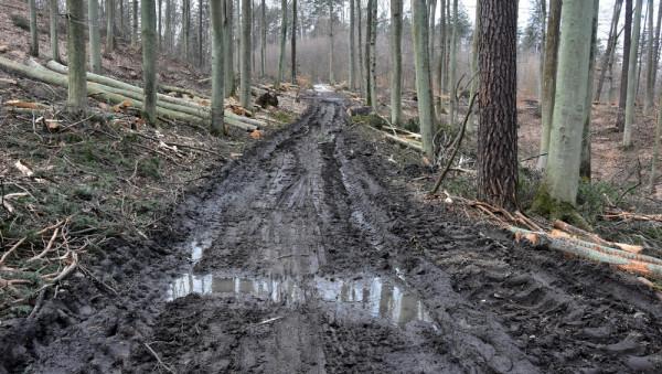 Tak wygląda las po zrywce. Lasy Oliwskie.