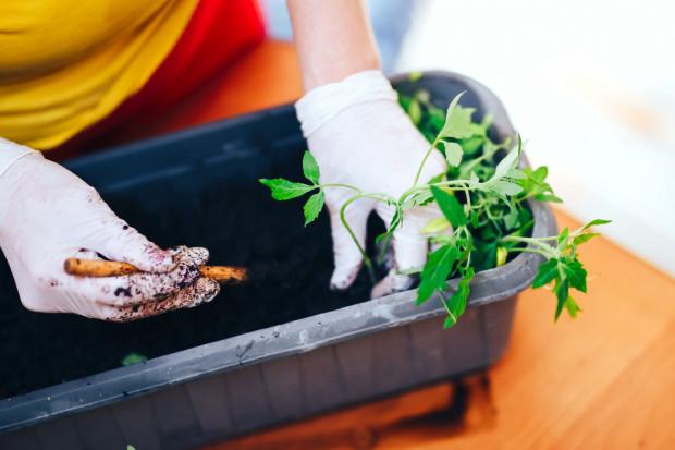 Na początek powinniśmy przygotować właściwe miejsce - doniczki, pojemniki, specjalne kosze i każde z nich ustawić w miejscu odpowiednim dla danej rośliny.