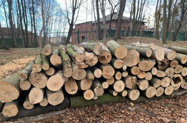 Na Westerplatte wycięto ostatnio ponad 200 drzew.