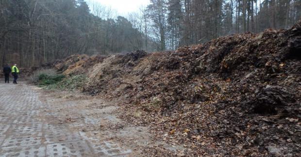 """Zdjęcie z interwencji inspektorów WIOŚ w Sopocie. Karę nałożono za składowanie odpadów zielonych (""""górki"""" po prawej stronie) w lesie przy ul. 23 Marca."""