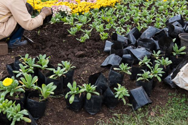 Sezon na prace ogrodnicze jest już rozpoczęty. By trawa i kwiaty rosły dobrze, przyda się kompost.