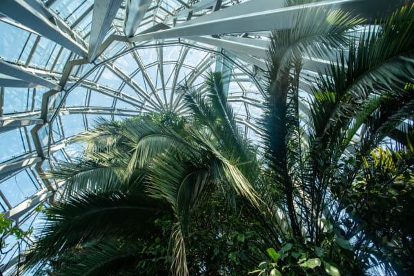 Jednym z tematów, który poróżnił radnych z władzami Gdańska, jest niedostateczna opieka nad palmą podczas przedłużającej się budowy palmiarni.